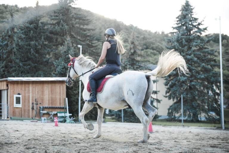 Jeździectwo – zwierzęta i sport
